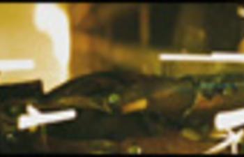 Pré-bande-annonce du film d'horreur A Nightmare on Elm Street